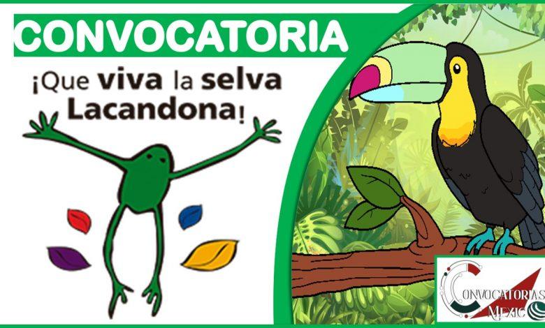 Convocatoria Que viva la Selva Lacandona 2021-2022