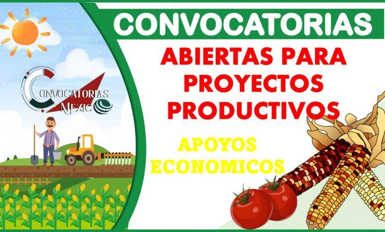 Convocatorias abiertas para proyectos productivos 2021-2022