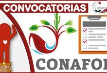 Convocatorias CONAFOR 2021-2022